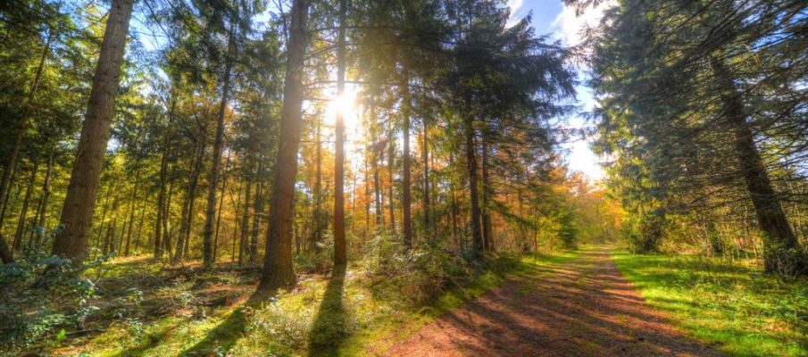 Las mejores cuentas del Sector forestal y bosques.