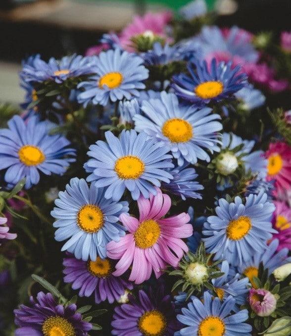 Flores para eventos especiales